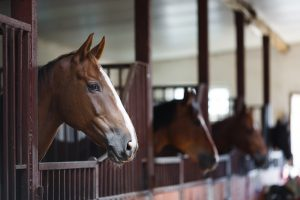 Stables with horses